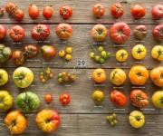 Segmentación horizontal: el ejemplo de salsas Prego